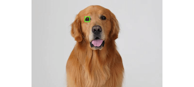 Real time eye AF for Animals
